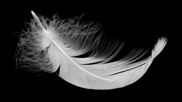 Feather wallpaperup
