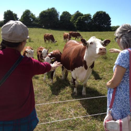 We say hello to the cows