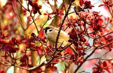 sparrow-2308083__340 Pixabay