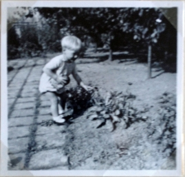 Finally, Torben starts to walk and takes his chance to examine the flowers in our garden