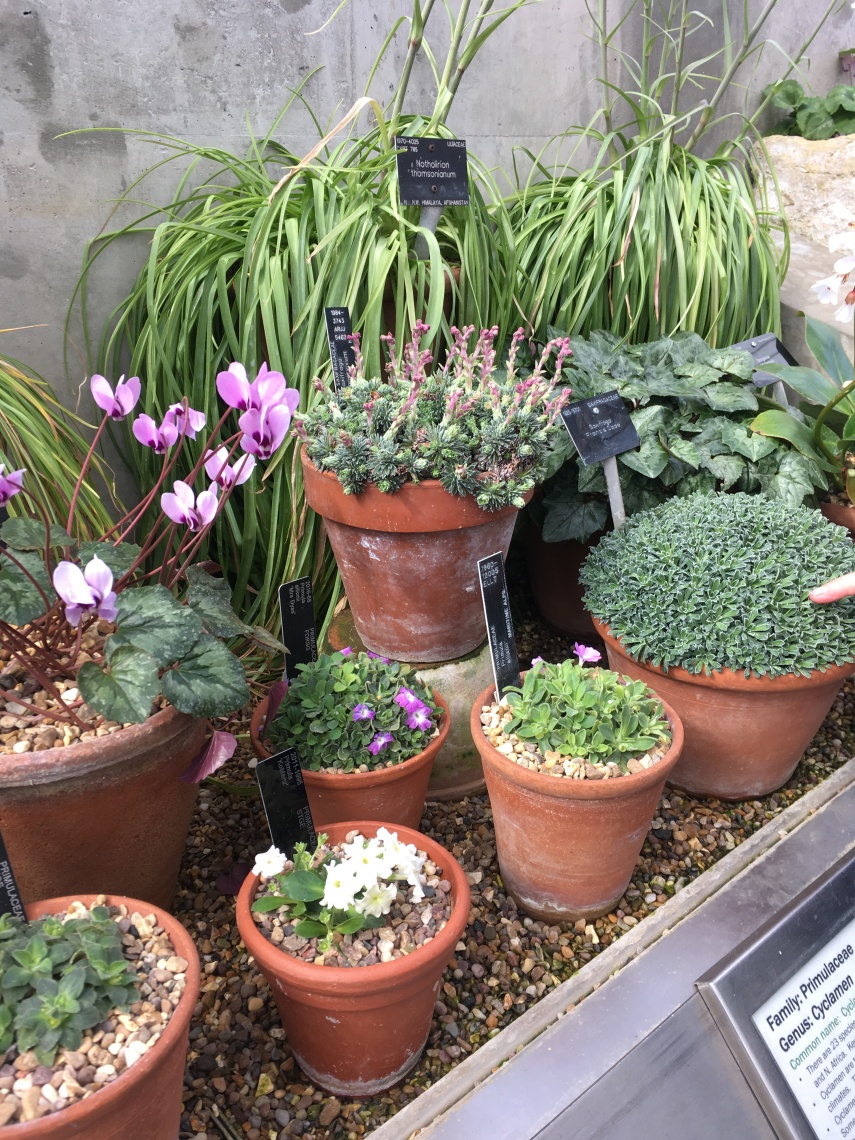 Plants from the Alpine House