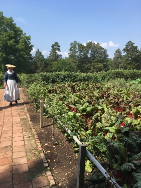 A lady in clothes from Washington's time is inspecting the beetroot garden.