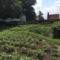 A part of the garden at Mount Vernon