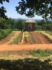 From the garden of Monticello