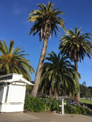 View from the Conservatory of Flowers at Golden Gate Park