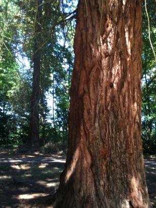 Champoeg State Park, Oregon