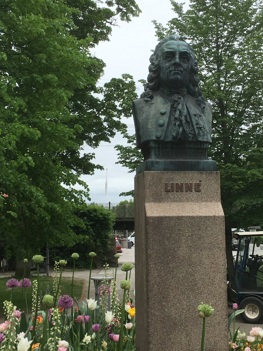 A statue of Carl von Linné in a park in Växjö close to his Latin School