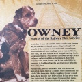 A photo of the beloved postal dog Owney. He carried tokens from postal workers all over theUSA