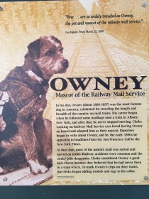 A photo of the beloved postal dog Owney. He carried tokens from postal workers all over the USA.