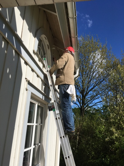 Henry is high up on a ladder busy painting.