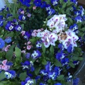 A pot of spring flowers in ourgarden